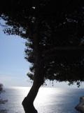 Baum vor der Sonne am Meer