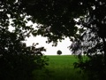 Baum in Sicht