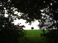 Tree in sight